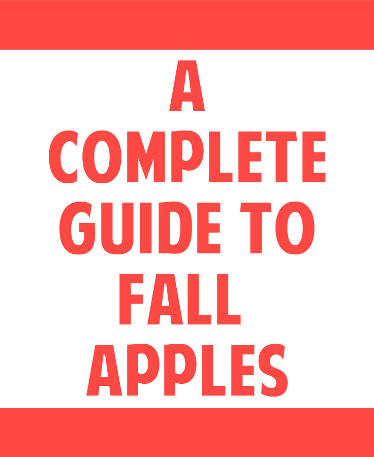 A Complete Guide to Fall Apples - everything you need to know about the different types of apples you'll find